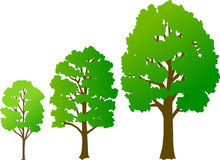 Tree Growth/eps royalty free illustration