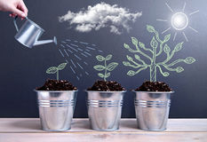 Tree growth phases. Different phases of plant growth evolution sketched on a chalkboard inside pots being watered Royalty Free Stock Image