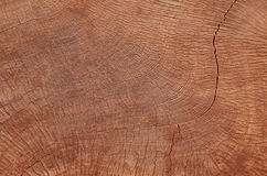 Tree growth rings background Royalty Free Stock Image