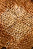 Tree growth rings and grain Royalty Free Stock Image