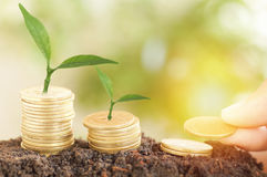 tree growth up and stacked on coins Royalty Free Stock Photos