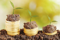 tree growth up and stacked on coins Royalty Free Stock Image