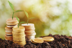 tree growth up and stacked on coins Stock Photo