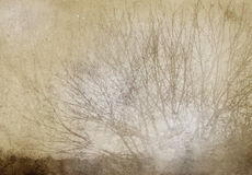 Tree grunge background Royalty Free Stock Image