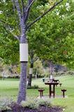 Tree guard on Autumn tree Royalty Free Stock Image