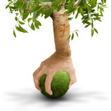 Tree hand. Unity of man and nature Royalty Free Stock Photography