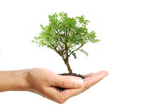 Tree in a hand stock photos