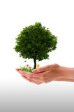 Tree - Hand Stock Image