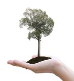 Tree in hand Royalty Free Stock Image
