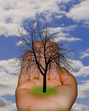 Tree in hand. A tree in a hand Stock Images
