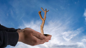 A tree on hand. Die tree on hand with sky background Royalty Free Stock Photo