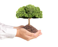Tree in hand Royalty Free Stock Photo