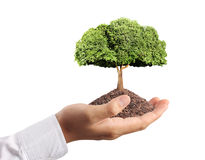 Tree in hand Royalty Free Stock Photos