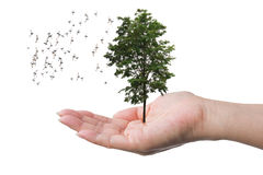 Tree in the hand of a woman with flocks of birds flying isolated on white background. Concept about World conservation Royalty Free Stock Photos
