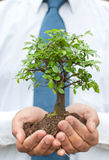 Tree in hands of businessman Royalty Free Stock Image