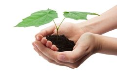 Tree in hands Royalty Free Stock Photos
