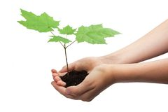 Tree in hands Stock Photography