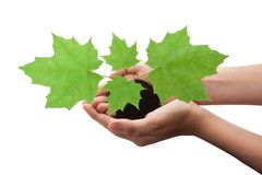 Tree in hands Royalty Free Stock Photo