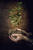 Tree in hands. Tree rooted in man's hand Stock Image