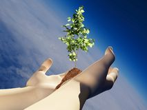Tree in hands. A small tree in her hands.3d render Royalty Free Stock Images