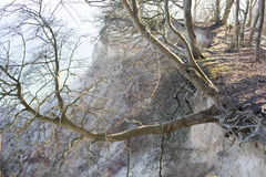 Tree hanging off a cliff Royalty Free Stock Photography