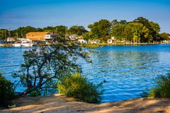 Tree hanging over the Back River at Cox Point Park in Essex, Mar stock image