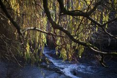 Tree over river royalty free stock images