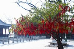 Tree hangs many red list. Many red list hangs intree Royalty Free Stock Photo