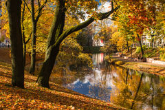 Tree hangs over the lake in autumn in Riga Royalty Free Stock Image