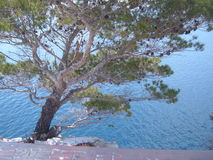 A tree hangs precariously over the water Royalty Free Stock Image