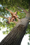 Tree Happy. Happy boy sitting high up in the branches of a tree he has climbed Stock Image