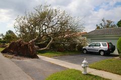 Tree Collapsed Hurricane Irma. A tree has been uprooted and knocked over revealing its root cluster, tearing up a patch of lawn, just sparing the house and the Stock Photos