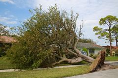 Tree Collapsed Hurricane Irma. A tree has been uprooted and knocked over revealing its root cluster, tearing up a patch of lawn, just sparing the house and the Stock Images