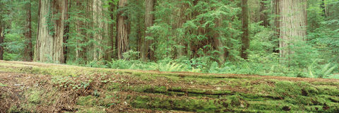 Tree that has fallen to the ground Stock Photos