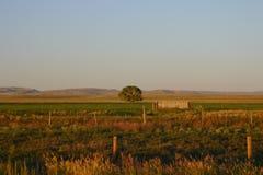 Tree And Hay Bales Stock Photo