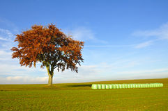 Tree and hay bales Stock Images