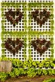Tree heart Royalty Free Stock Image