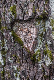 Tree with a heart carved on it. Stock Photo