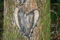 Tree Heart Carving. Old heart carving in tree with moss stock photography