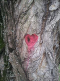 Tree heart Royalty Free Stock Photography