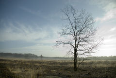 Tree in the heathland. With low sun stock image