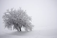 Tree with heavy frost and snow Royalty Free Stock Image