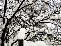 A Tree after a Heavy Snow Stock Photos