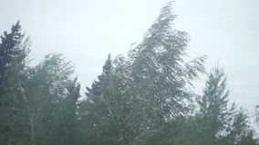 Tree during heavy wind. Hd stock footage