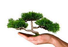 Tree held in hand. Beautiful green tree held in hand Royalty Free Stock Image
