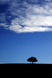Tree hermit. Silouette lonely Tree in blue sky royalty free stock photos