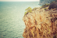 Tree on high cliff above sea Royalty Free Stock Photography