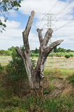 Tree and high voltage power line Royalty Free Stock Photo