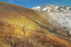A tree in the highland yellowed steppe in late autumn with the f Stock Images