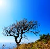 A tree on hight mountain Stock Photo
